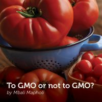 To GMO or not to GMO?